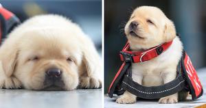 K-9 pups in training