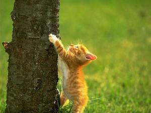 Kitten Climbing A درخت