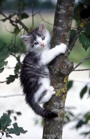 Kitten In A Tree