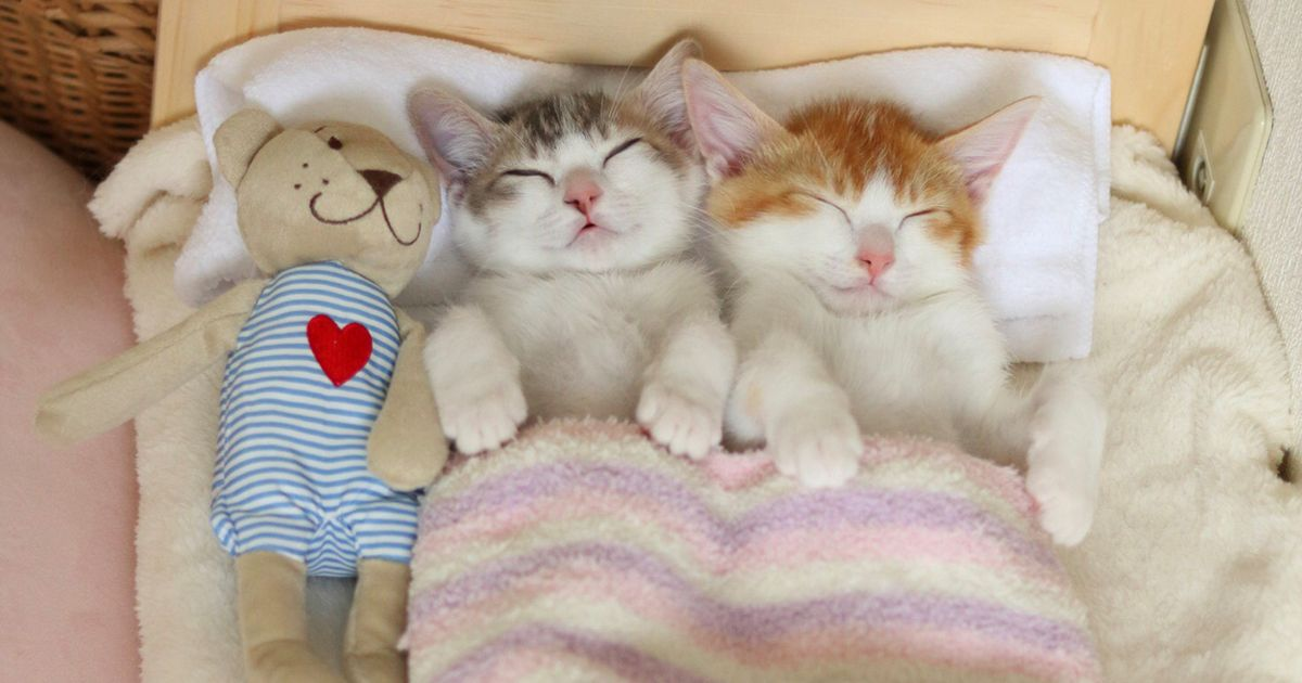 cats and kittens club images kittens hd wallpaper and background