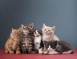 बिल्ली के बच्चे