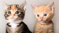 Kittens - kittens photo