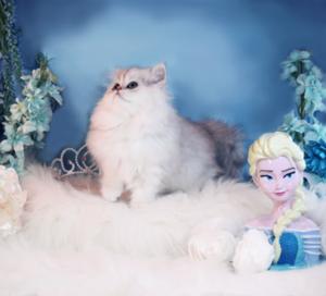 Kitty Photoshoot