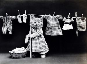 Laundry 日