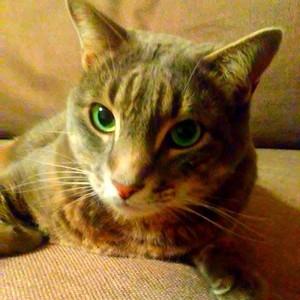 My Cat Bentley