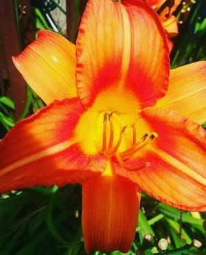 jeruk, orange bunga