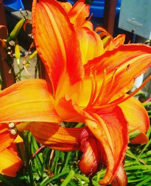 naranja flor