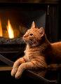 Relaxing sa pamamagitan ng The apoy