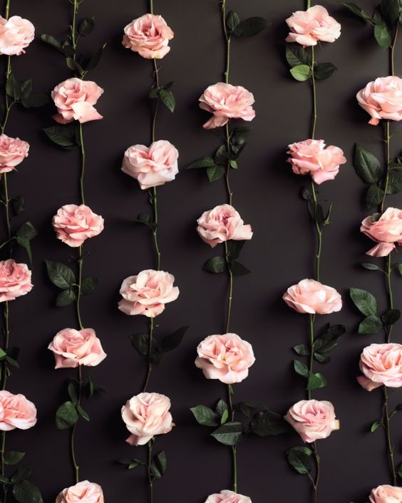 Roses Images Roses Wallpaper And Background Photos 41558101