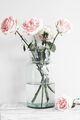 Roses - roses photo
