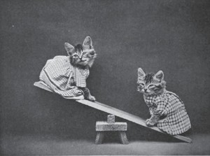 See Saw Kitties