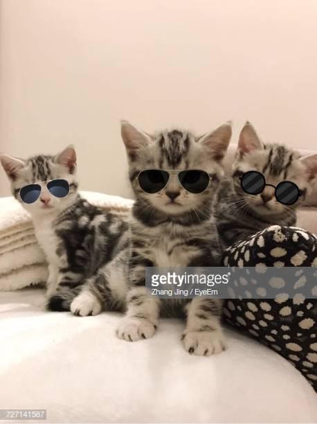 Three Cool Kitties
