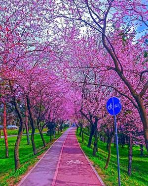 Timisoara, Romania