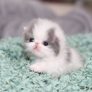 Tiny cute kitten