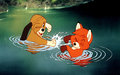 Todd And Copper Playing - the-fox-and-the-hound wallpaper
