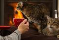 Warm Hot tsokolate sa pamamagitan ng The Fireplace