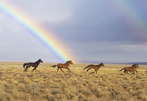 Wild caballos and a rainbow.