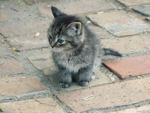 adorable gray 고양이