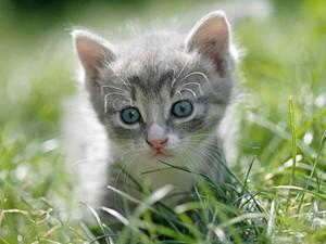 adorable gray kitties