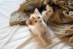 adorable 小猫