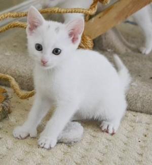adorable 고양이
