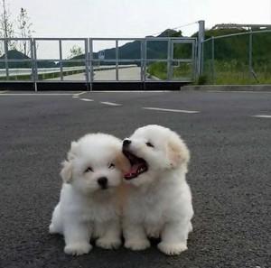 adorable chó con