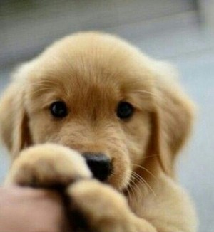 adorable anak anjing