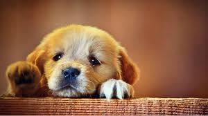 adorable puppies