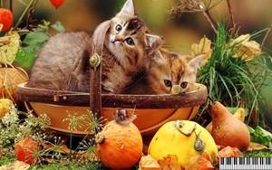 autumn chatons