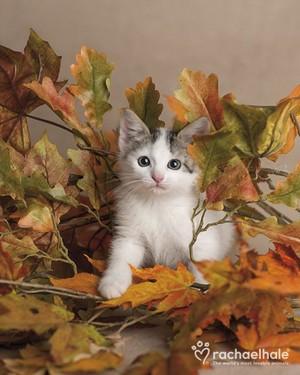 autumn anak kucing