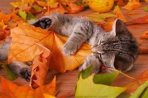 autumn mèo con
