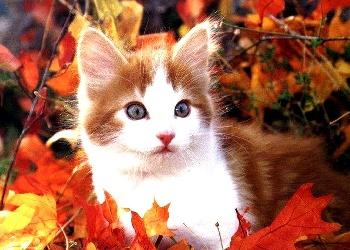 autumn kittens