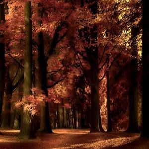 beautiful and magical autumn🍁🍂🍃💖