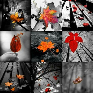 beautiful and magical autumn🍁🍂🍃💖