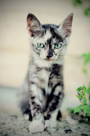 beautiful Katzen
