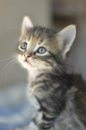 beautiful mèo con