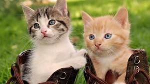 beautiful gatitos