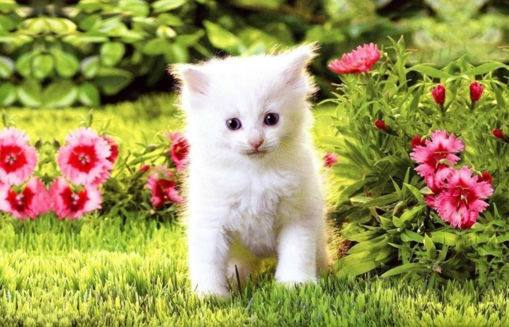 Kittens Images Beautiful HD Wallpaper And Background Photos