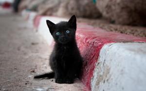 black gatitos