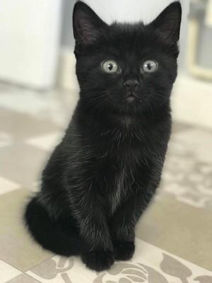 black 子猫