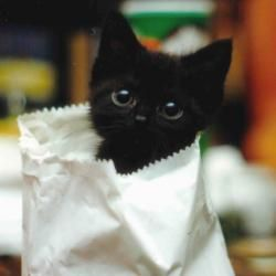 black 小猫