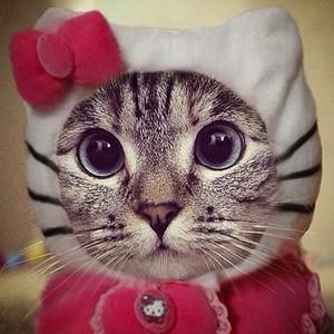 gatos in costume