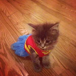 고양이 in costume