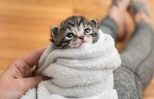 cozy and cuddly mèo con