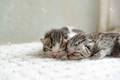 cozy catnap - cute-kittens photo