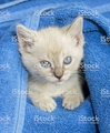 cozy kitten - cute-kittens photo