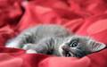catnapping - cute-kittens photo