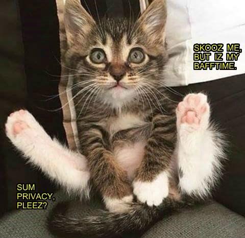 Cute And Funny Kitten Meme Anak Kucing Cute Foto 41536155 Fanpop