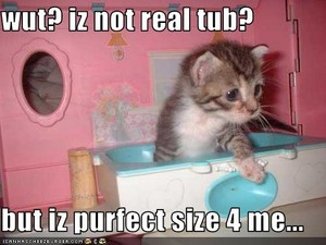 cute and funny kitten meme