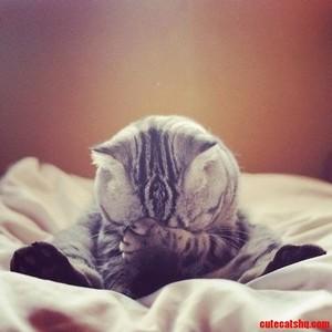 cute and shy বেড়ালছানা